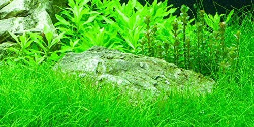 Aquascaping Beispiele